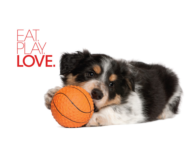 Eat, Play, Love